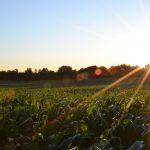 自宅の畑がパワースポットになる~豊作にするための土壌づくり